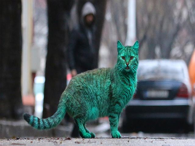 Yeşil Siyahlı Sevimli Kedi
