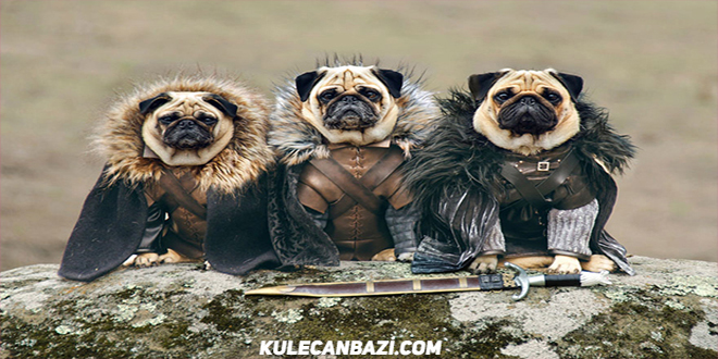 "3 Sevimli Pug ve ""Game Of Thrones"" – Kule Canbazı Pug Game Of Thrones"